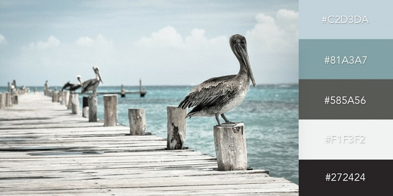 پالت رنگی ساحل خلیج