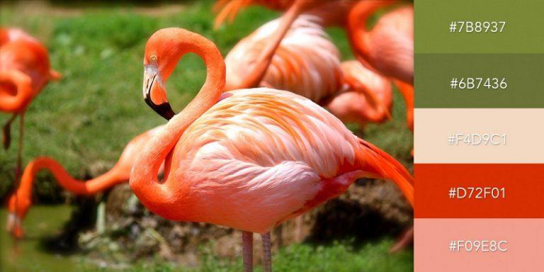 پالت رنگی حیات وحش استوایی